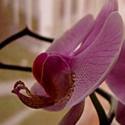 Szárnyra-kapó-ősz-Virágos-ablakom